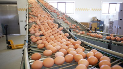 Factory Farming Can Damage the Environment