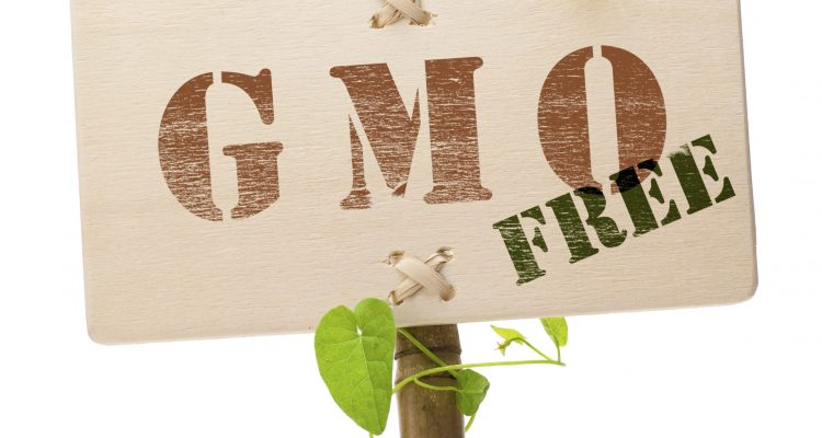 GMO free foods