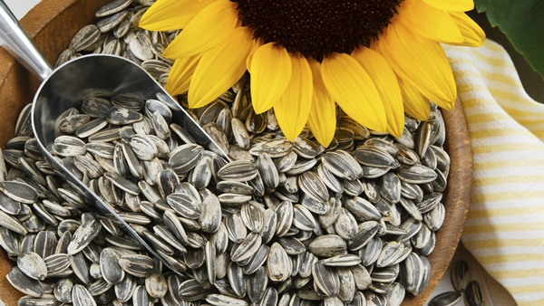 Sunflower Seeds Help Lower Blood Pressure