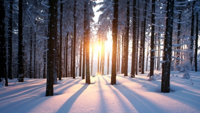 Foods to eat in winter for better health