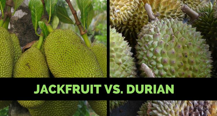 Jackfruit Vs. Durian