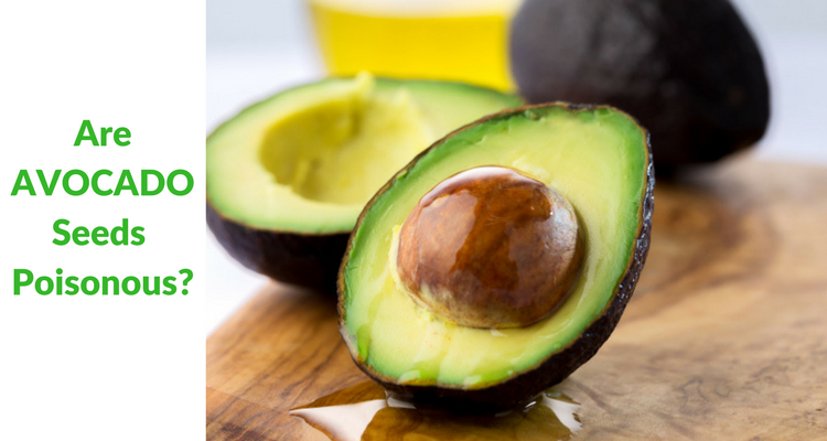 Are Avocado Seeds Poisonous