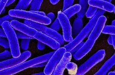 Listeria Recall 2017