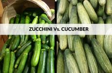 Zucchini Vs. Cucumber
